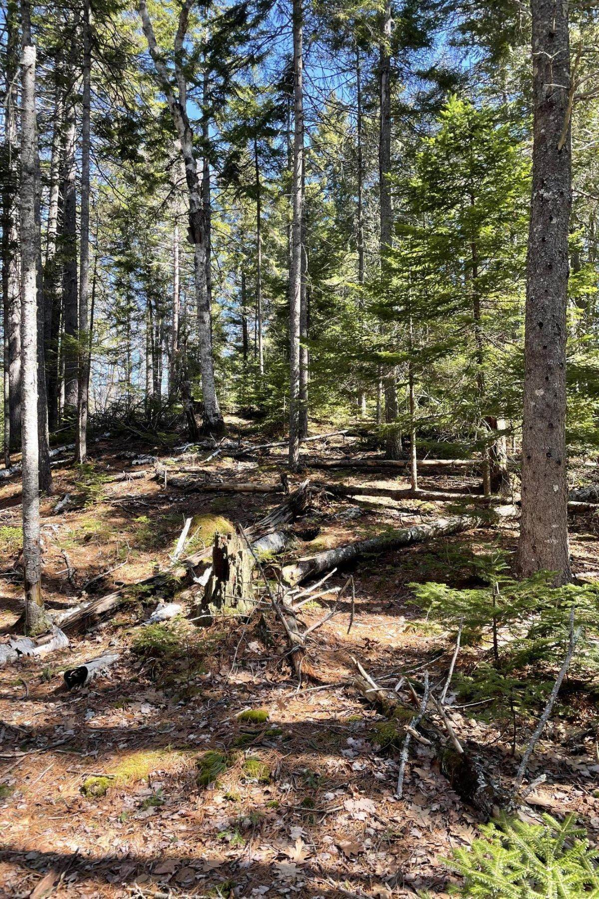 Property for Sale at Mount Desert, ME 04660